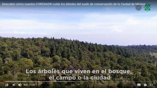 🎥 El cuidado en los árboles en el suelo de conservación